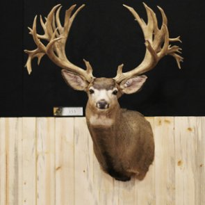 20 of the largest mule deer of all time