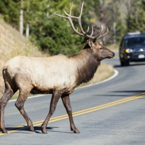 Montana's new roadkill permit puts meat into freezers