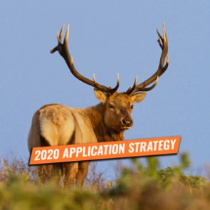 APPLICATION STRATEGY 2020: California Elk and Sheep