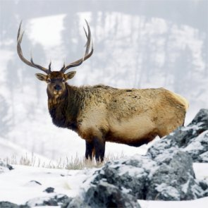 RMEF celebrates seventh year of growth