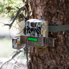5 quick tips to ensure you get the most out of your trail cameras