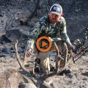 True Conservation: A mule deer film