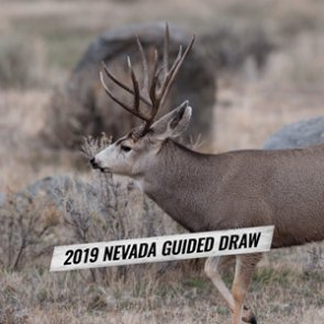 How to apply for Nevada's 2019 nonresident mule deer guided draw