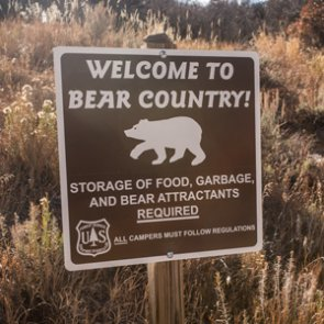 How to camp safely in grizzly bear country