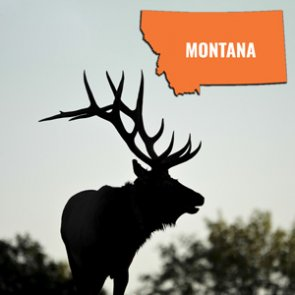 How to look up your Montana bonus and preference points