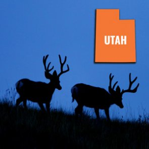 How to look up your Utah bonus and preference points