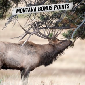 How to purchase Montana bonus points and preference points