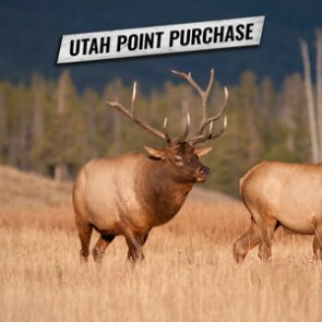 How to purchase Utah bonus and preference points