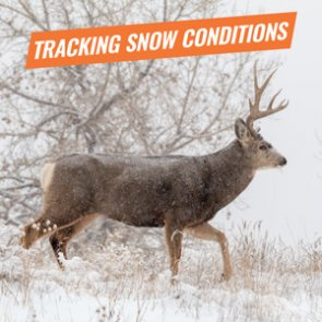 How to track snow conditions before your upcoming hunt