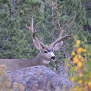 New Mexico hunters urged to complete draw applications online or by phone to protect public health