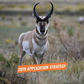 APPLICATION STRATEGY 2019: Idaho Antelope