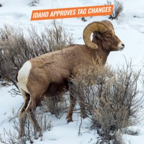 Idaho approves changes to moose, bighorn sheep and mountain goat quotas