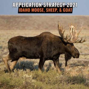 APPLICATION STRATEGY 2021: Idaho moose, bighorn sheep, and mountain goat