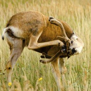 """Idaho elk and mule deer numbers on """"slight uptick"""""""