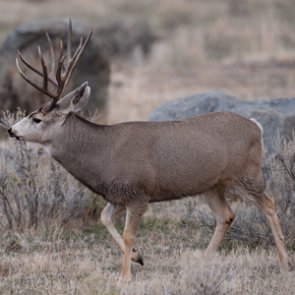 IDFG requests help in four poaching cases