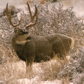 Jail time for two Idaho poachers