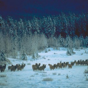 Idaho temporarily waives hunter education field day requirement