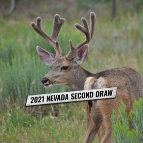 List of 2021 Nevada tags available in the Second Draw