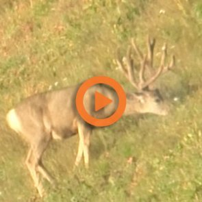 Into Thin Air: Bowhunting mule deer at 12,000 ft.