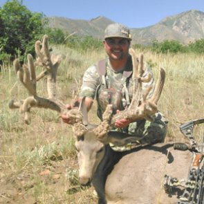 New velvet nontypical world record mule deer