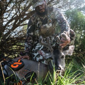 Early archery season Coues deer tactics