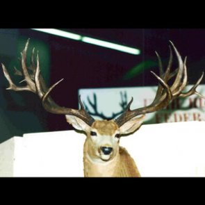 40 inch plus: The widest bucks of all time