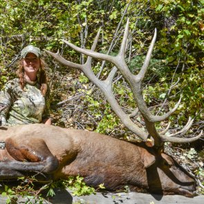 Persistence proves to be the best tactic for elk