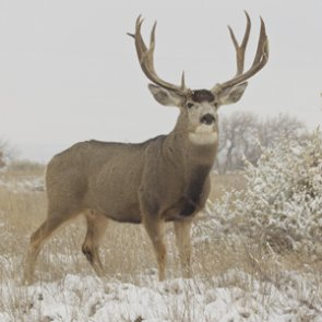 Lifetime hunting bans for two Idaho poachers