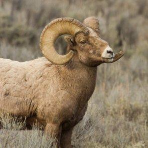 Wyoming Super Tag raffle raises $641,950