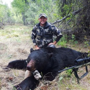 The unknown black bears of Arizona
