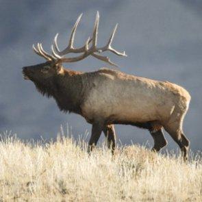APPLICATION STRATEGY 2016: Nevada Deer, Elk, Antelope