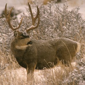 APPLICATION STRATEGY 2017: Wyoming Deer and Antelope