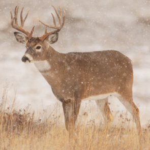 Record year for Idaho hunters in 2015