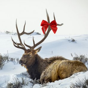 Last-minute Christmas gift ideas for hunters