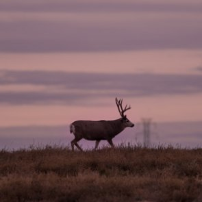 Montana FWP will pay for CWD testing statewide