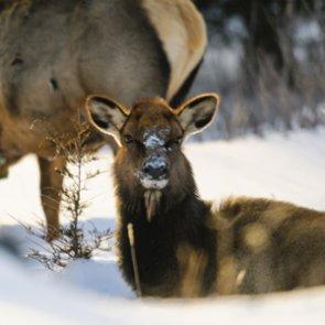 Michigan elk seasons were a success