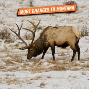 ALERT: Montana bill to remove special permit limits if hunt district exceeds sustainable population