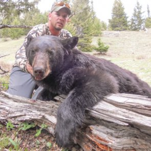 Top 10 reasons to do a spring bear hunt in Montana