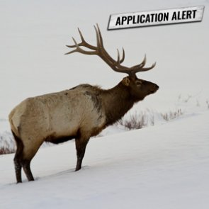 ALERT: Montana changes 2020 deer/elk application deadline!