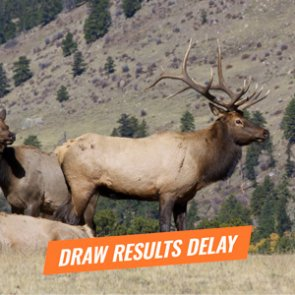 2018 Montana deer and elk draw results postponed a week