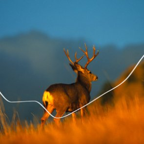 Montana's historical mule deer population and harvest breakdown
