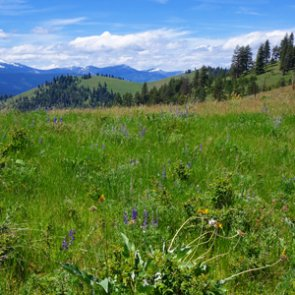 Nonresident students in Montana could purchase hunting licenses at resident rates