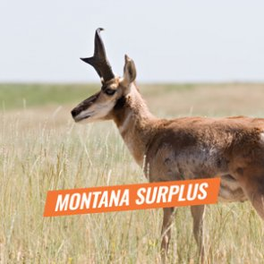 Montana over-the-counter antlerless, plus surplus antelope and elk tag list