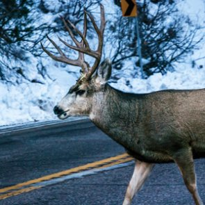 New Washington law makes dinner out of roadkill