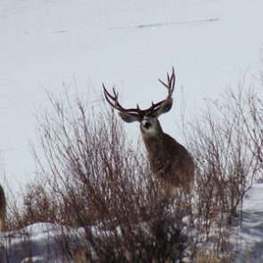 New shed hunting rules in Colorado
