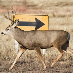 Roadkill migration study underway in Idaho