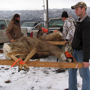 Mule deer decline in Utah?