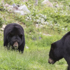 NJ hunters kill 62 black bears on opening day