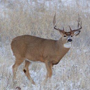 New deer management program in place for Nebraska
