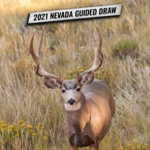 How to apply for Nevada's 2021 nonresident mule deer guided draw